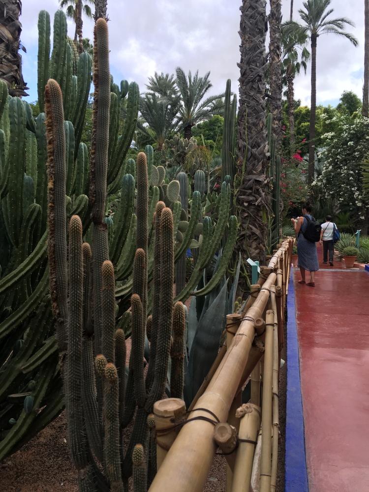 m-gardens-cactus-2