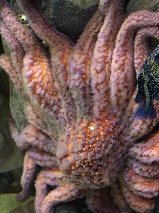 Octopus at Oceanarium, Lisbon