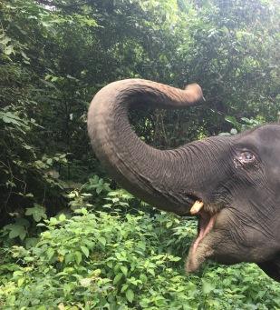 Wanna, our elephant