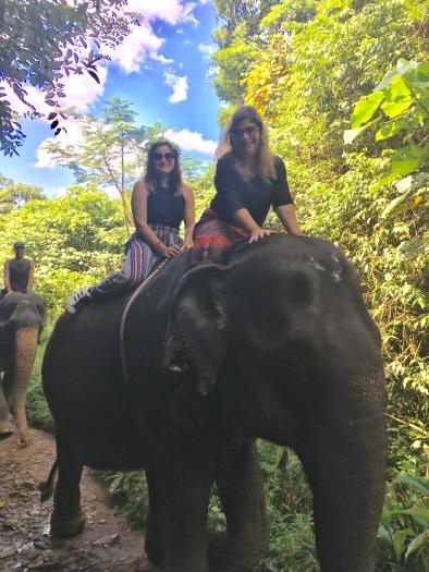 Elephant Reserve, Thailand