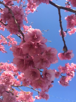 Cherry Blossom Fower