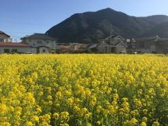 Kawazu, Japan